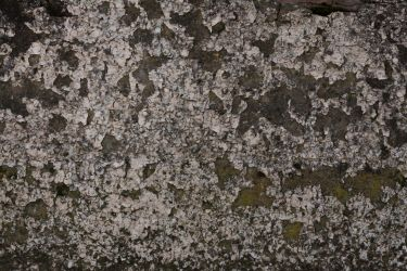 Wall moss cracked plaster texture-1 by hhh316