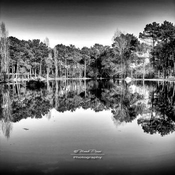 Water Reflections by NunoPires