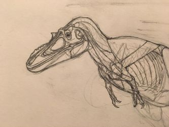 Alioramus sketch by Dinodc98