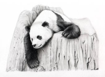 Sleeping Panda by xfkirsten
