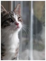 Kitten gazing out of the Window by i-am-enrooted