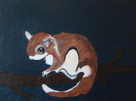 Flying Squirrel by KittiKristy