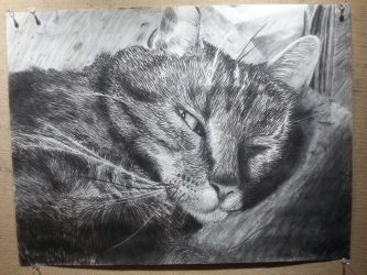 Charcoal Kitty by Lexiathecat