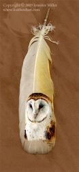 Barn Owl Portrait by Nambroth