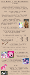 G4 MLP Anatomy Notes - Misc- Ear, Core, Tail by Pix3M