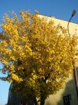 Yellow leaves by Cyklopi