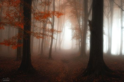 -Forest cathedral- by Janek-Sedlar