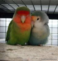 Love birds by babsartcreations