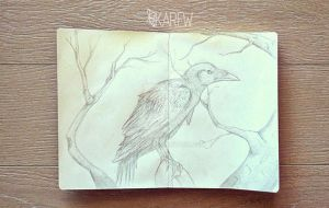 The raven by Karew