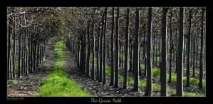The Green Path by Aderet