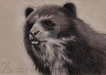 Spectacled Bear 1 by ZoeSotet
