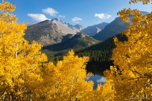 Between the Glowing Aspens by MirMidPhotos