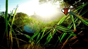 Mantis by Jasper-M