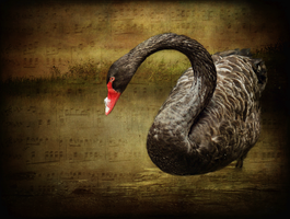 Swan Song by Inadesign