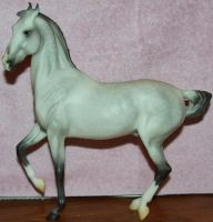 Breyer - Rajah 1 of 5 Stock~ Marwari Horse by Lovely-DreamCatcher