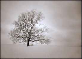 A single Tree... by MichiLauke