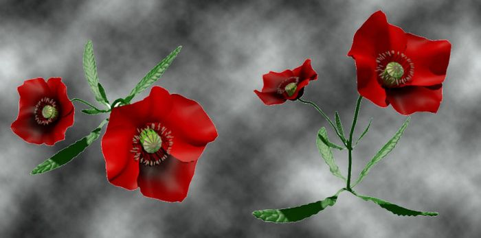coquelicot1 by hubert61