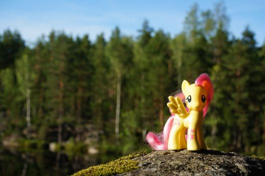 Fluttershy in Nuuksio National Park by Cabraloca