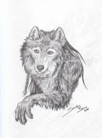 Wolf Portrait by sandrabong
