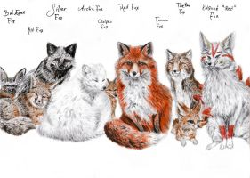 A Bunch of Types of Foxes by coonotafoo