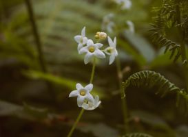 Little stars by cindywebbphotography