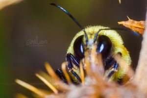 133: Bashful Bumblebee by FramedByNature