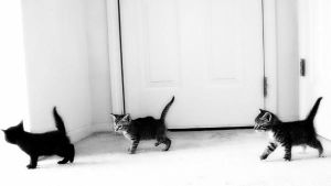 kittens by courtleigh