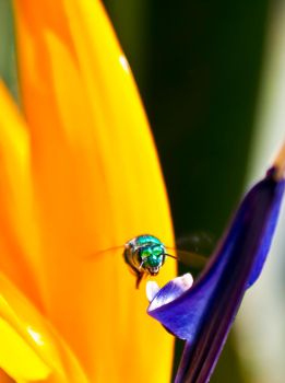 Green Bee by philipe3d