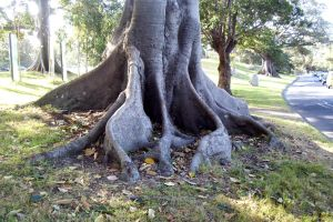 Tree Roots 3 by serp-stock
