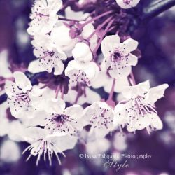 Flowers 2 by ironicna