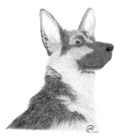 German Shepherd by Laeril