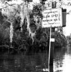 Slow down, Manatee zone by harmonie0805