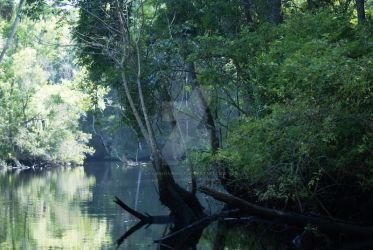 Aucilla River by annehawholt