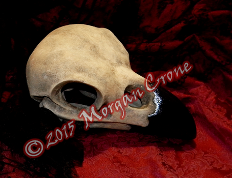 Large Crow Skull Sculpture 2 by MorganCrone
