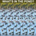 What's in the Pond? by 3Dimka