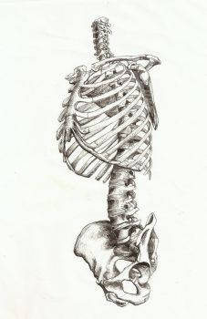 torso front view by HateSong