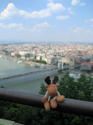 A Reindeer in Budapest by Miandre