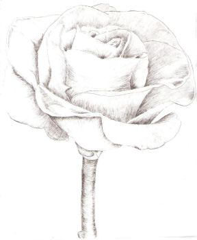 Intaglio Black Rose by MoonlightRomance16