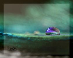 Floating On Oceans Of Green by Silver-Dew-Drop