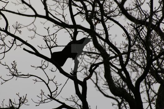 crow in the tree by aswad-hajja