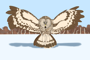 Great Gray Owl by baratus93