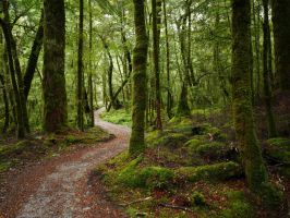 Routeburn beech forest by lmsgblh