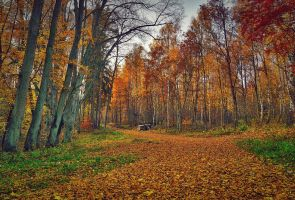 Colorful  Forest by CitizenFresh