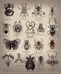 Insectonomicon by Larbesta