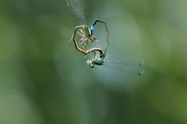 love is in the air... by clochartist-photo