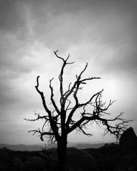 lonely tree by lowjacker