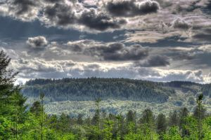 Forest of Dean by Preachman