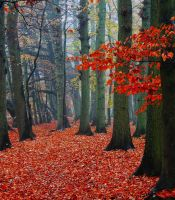 Colorfall by Hepiefull