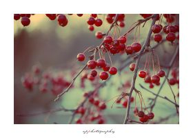 Berries by ap-photography