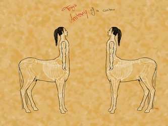 Centaur anatomy - skeleton and outlines by Death-of-Fantasy